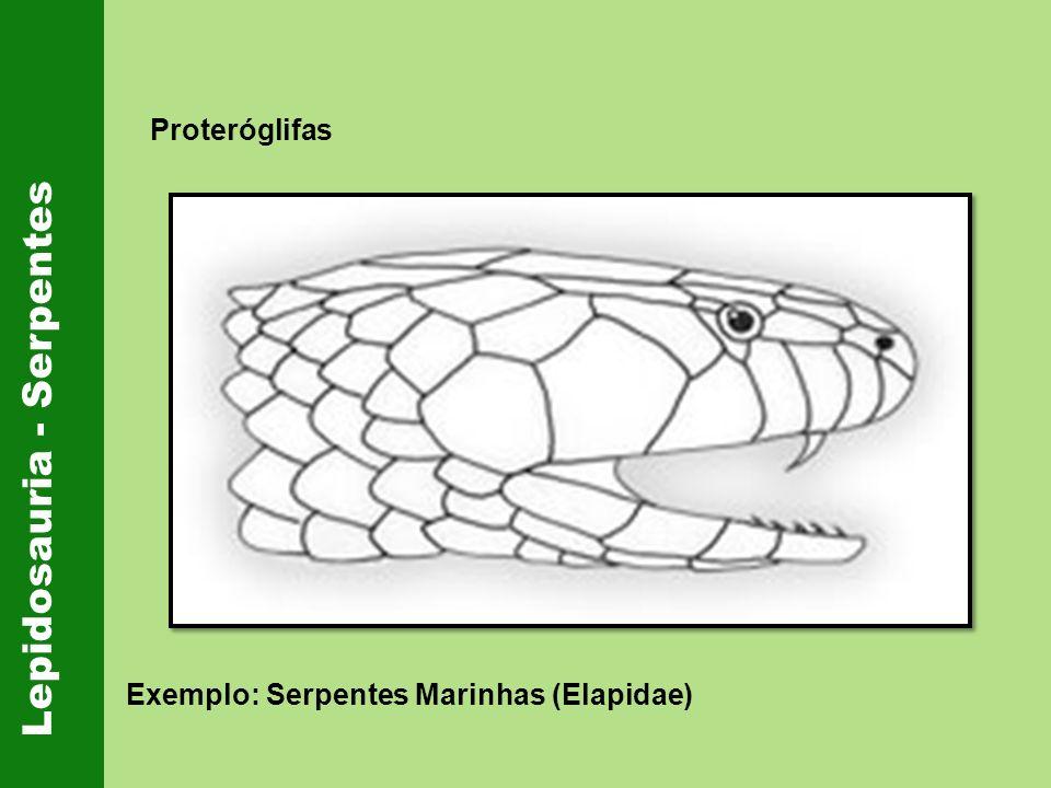 Lepidosauria - Serpentes Proteróglifas Exemplo: Serpentes Marinhas (Elapidae)