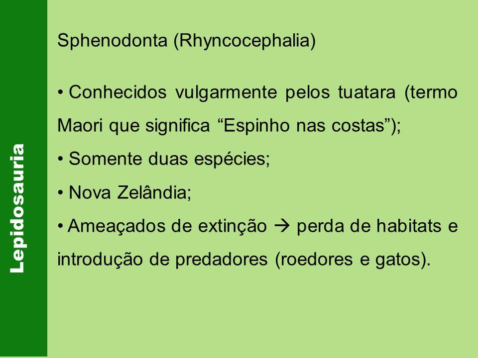 Lepidosauria Sphenodonta (Rhyncocephalia) Conhecidos vulgarmente pelos tuatara (termo Maori que significa Espinho nas costas); Somente duas espécies;