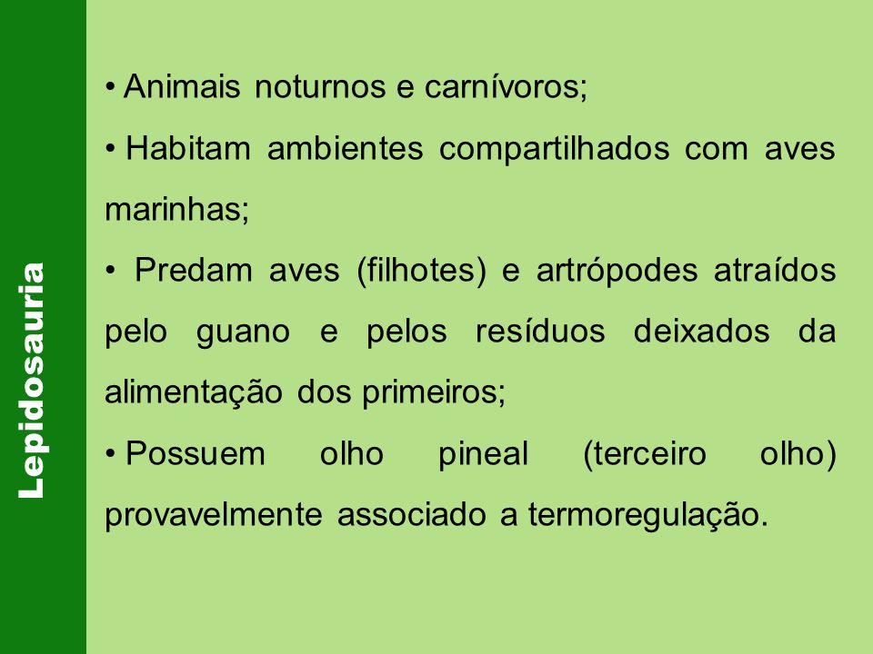 Lepidosauria Animais noturnos e carnívoros; Habitam ambientes compartilhados com aves marinhas; Predam aves (filhotes) e artrópodes atraídos pelo guan