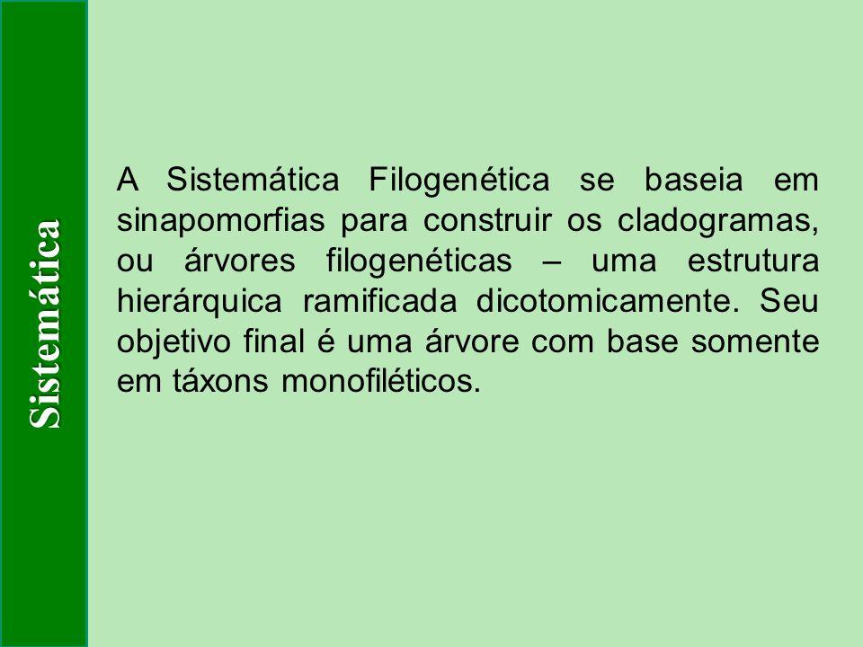 A Sistemática Filogenética se baseia em sinapomorfias para construir os cladogramas, ou árvores filogenéticas – uma estrutura hierárquica ramificada d
