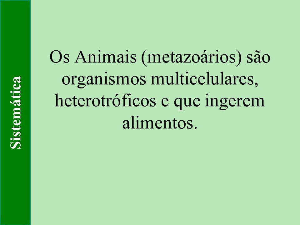 Os Animais (metazoários) são organismos multicelulares, heterotróficos e que ingerem alimentos. Sistemática