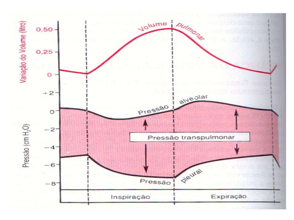 Complacência ou Compliância Pulmonar É o grau de expansão dos pulmões para cada aumento na pressão transpulmonar.