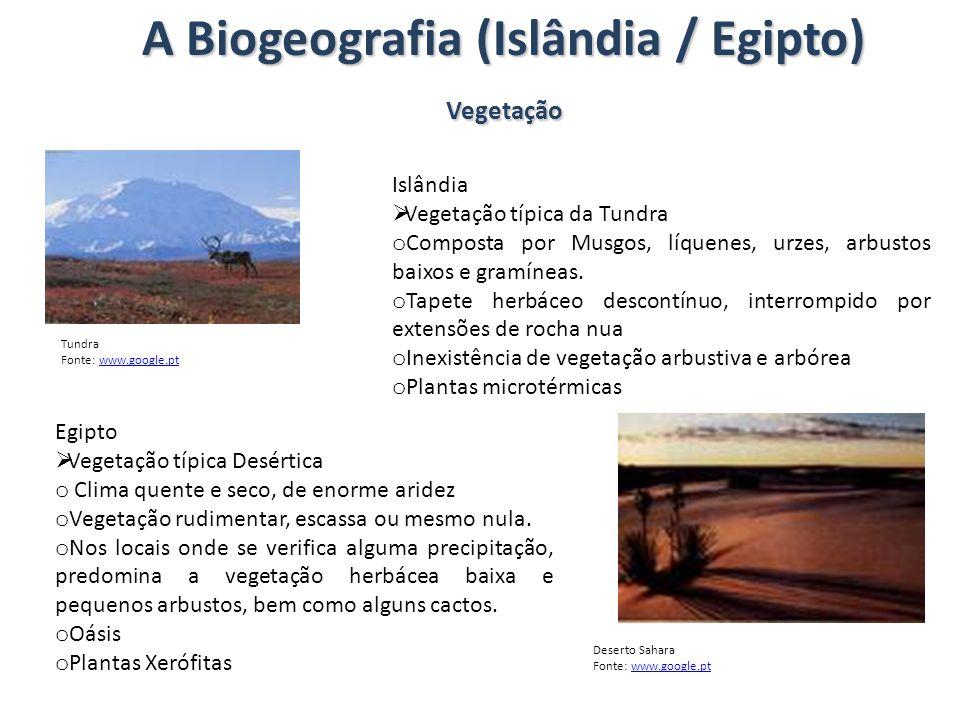 A Biogeografia (Islândia / Egipto) Vegetação Islândia Vegetação típica da Tundra o Composta por Musgos, líquenes, urzes, arbustos baixos e gramíneas.