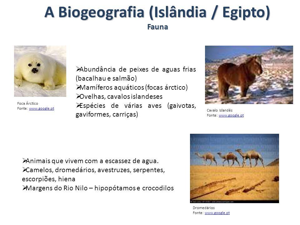 A Biogeografia (Islândia / Egipto) Fauna Abundância de peixes de aguas frias (bacalhau e salmão) Mamíferos aquáticos (focas árctico) Ovelhas, cavalos