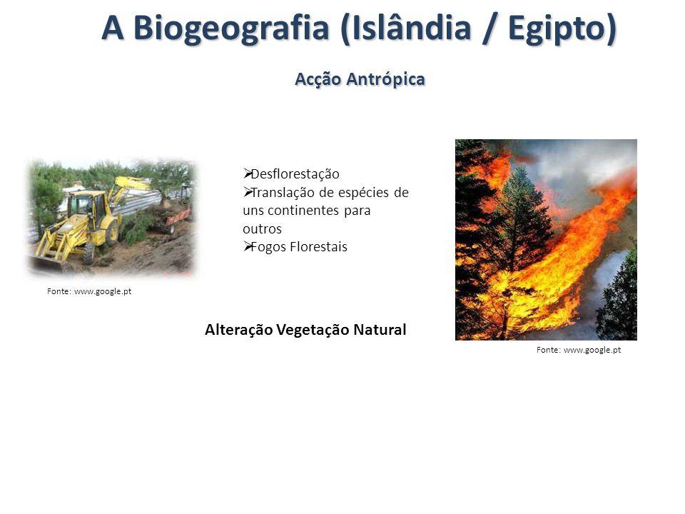 A Biogeografia (Islândia / Egipto) Acção Antrópica Desflorestação Translação de espécies de uns continentes para outros Fogos Florestais Alteração Veg