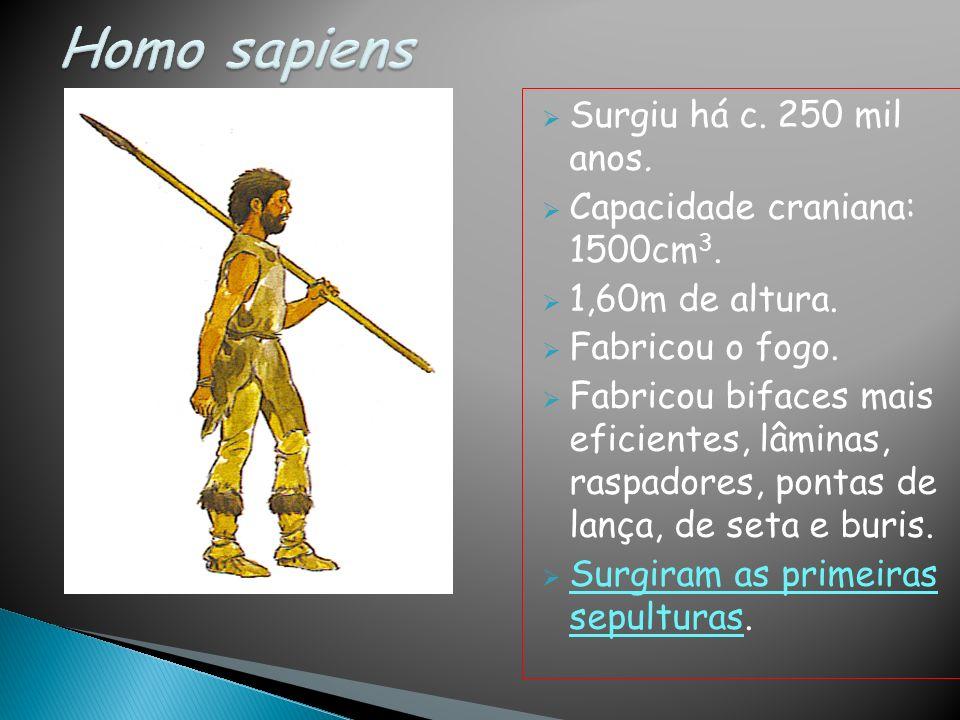 Surgiu há c. 250 mil anos. Capacidade craniana: 1500cm 3. 1,60m de altura. Fabricou o fogo. Fabricou bifaces mais eficientes, lâminas, raspadores, pon