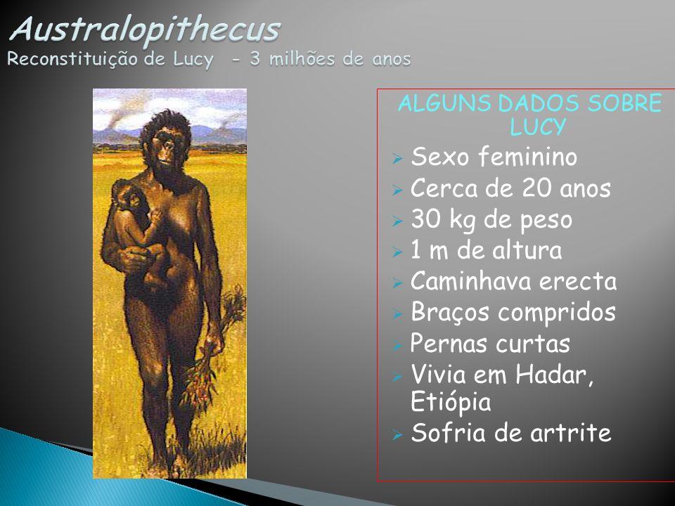 ALGUNS DADOS SOBRE LUCY Sexo feminino Cerca de 20 anos 30 kg de peso 1 m de altura Caminhava erecta Braços compridos Pernas curtas Vivia em Hadar, Eti