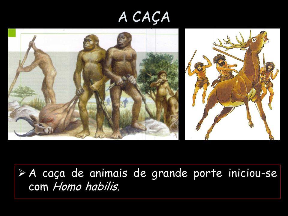 A CAÇA A caça de animais de grande porte iniciou-se com Homo habilis.