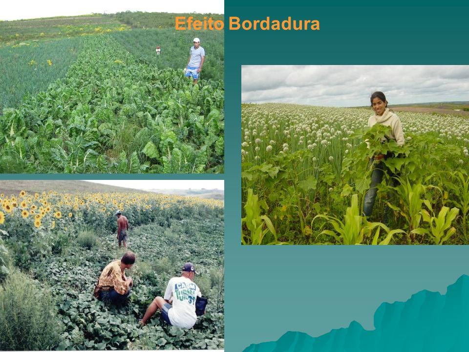 Foto: BioNatur Efeito Bordadura