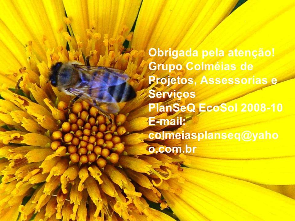 Desafios pós PlanSeQ Divulgação dos Produtos da economia solidária, agroecologia e do comércio justo; Fomentar a organização de grupos produtivos de m
