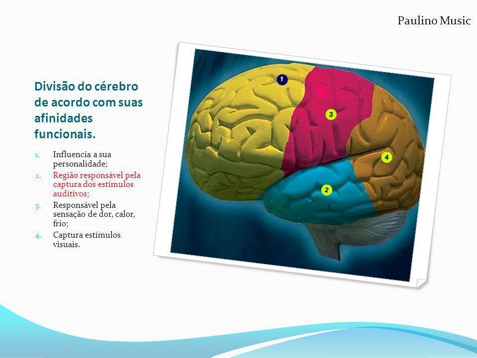 Divisão do cérebro de acordo com suas afinidades funcionais. 1. Influencia a sua personalidade; 2. Região responsável pela captura dos estímulos audit