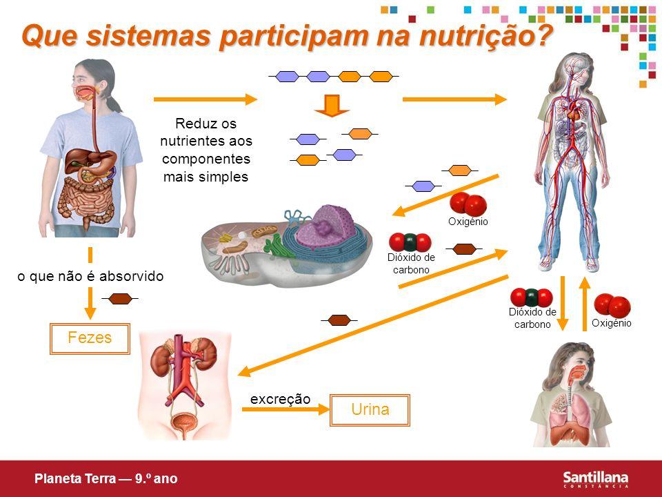 Oxigénio Que sistemas participam na nutrição? Reduz os nutrientes aos componentes mais simples o que não é absorvido Fezes Urina excreção Planeta Terr