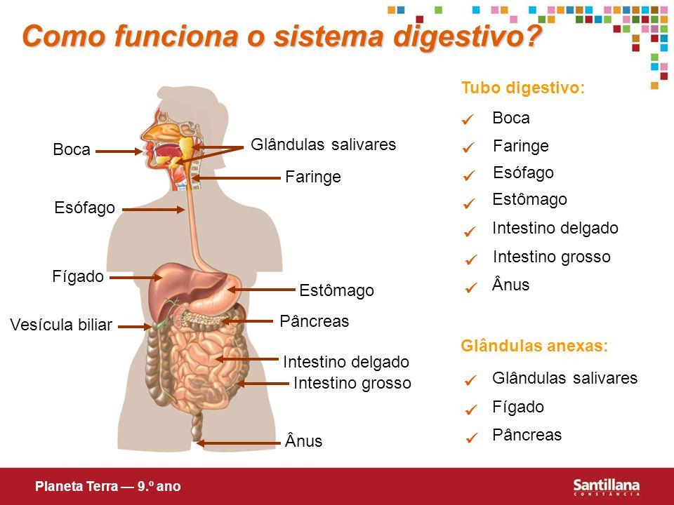 Como funciona o sistema digestivo? Tubo digestivo: Glândulas anexas: Glândulas salivares Fígado Pâncreas Boca Esófago Estômago Intestino delgado Intes
