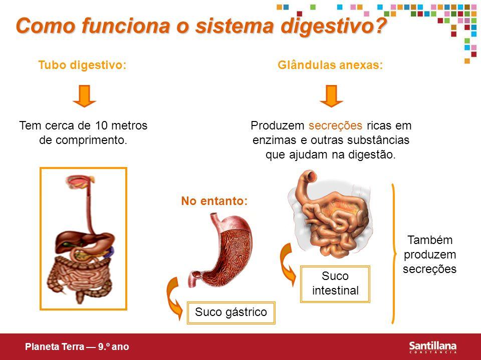 Como funciona o sistema digestivo? Tubo digestivo:Glândulas anexas: Tem cerca de 10 metros de comprimento. Produzem secreções ricas em enzimas e outra