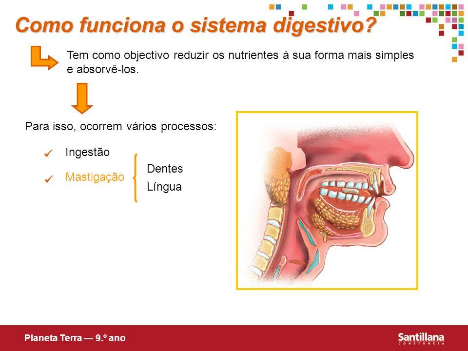 Tem como objectivo reduzir os nutrientes à sua forma mais simples e absorvê-los. Para isso, ocorrem vários processos: Ingestão Mastigação Dentes Língu