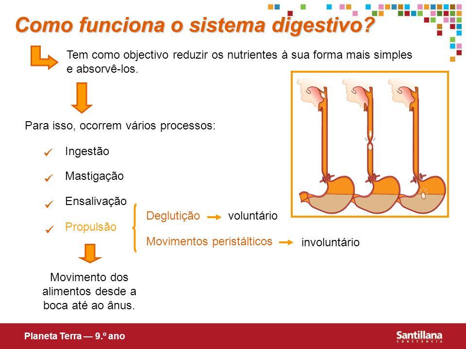 Tem como objectivo reduzir os nutrientes à sua forma mais simples e absorvê-los. Para isso, ocorrem vários processos: Ingestão Mastigação Ensalivação