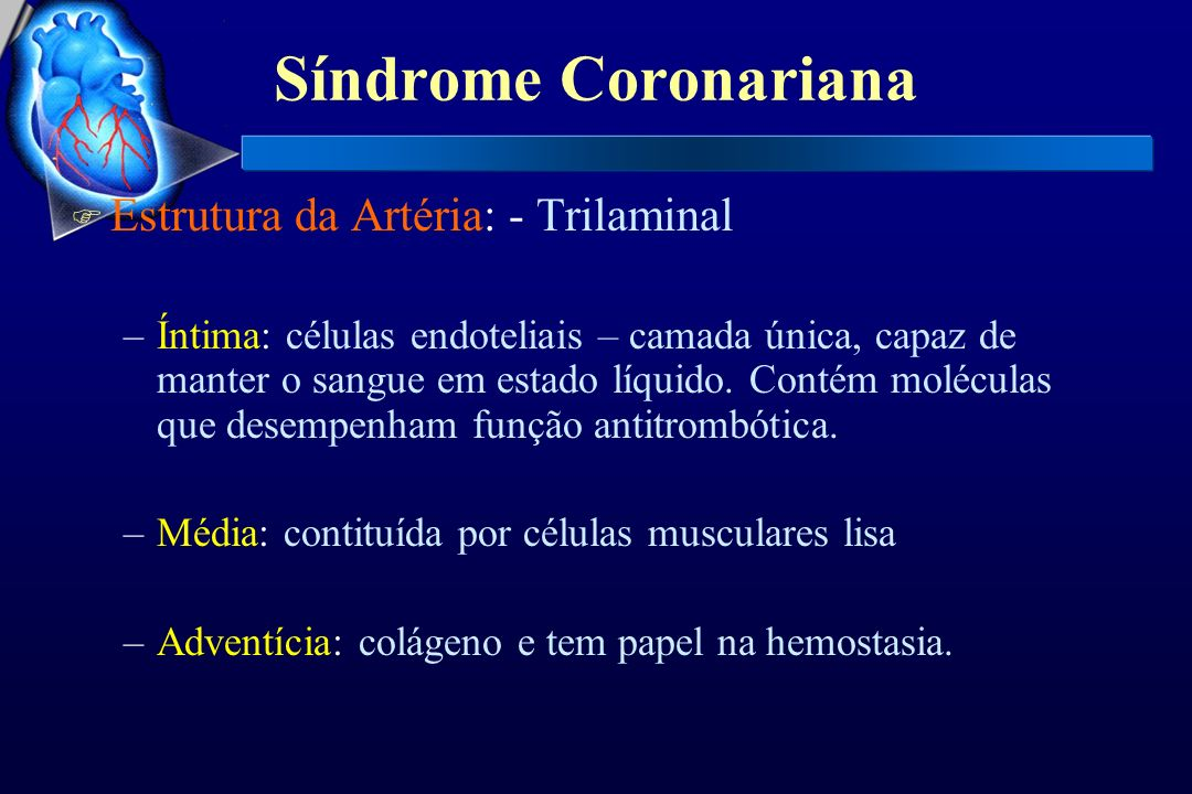 Síndrome Coronariana F Estrutura da Artéria: - Trilaminal –Íntima: células endoteliais – camada única, capaz de manter o sangue em estado líquido. Con