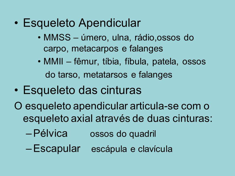 Esqueleto Apendicular MMSS – úmero, ulna, rádio,ossos do carpo, metacarpos e falanges MMII – fêmur, tíbia, fíbula, patela, ossos do tarso, metatarsos