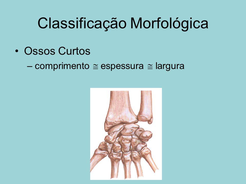 Classificação Morfológica Ossos Curtos –comprimento espessura largura