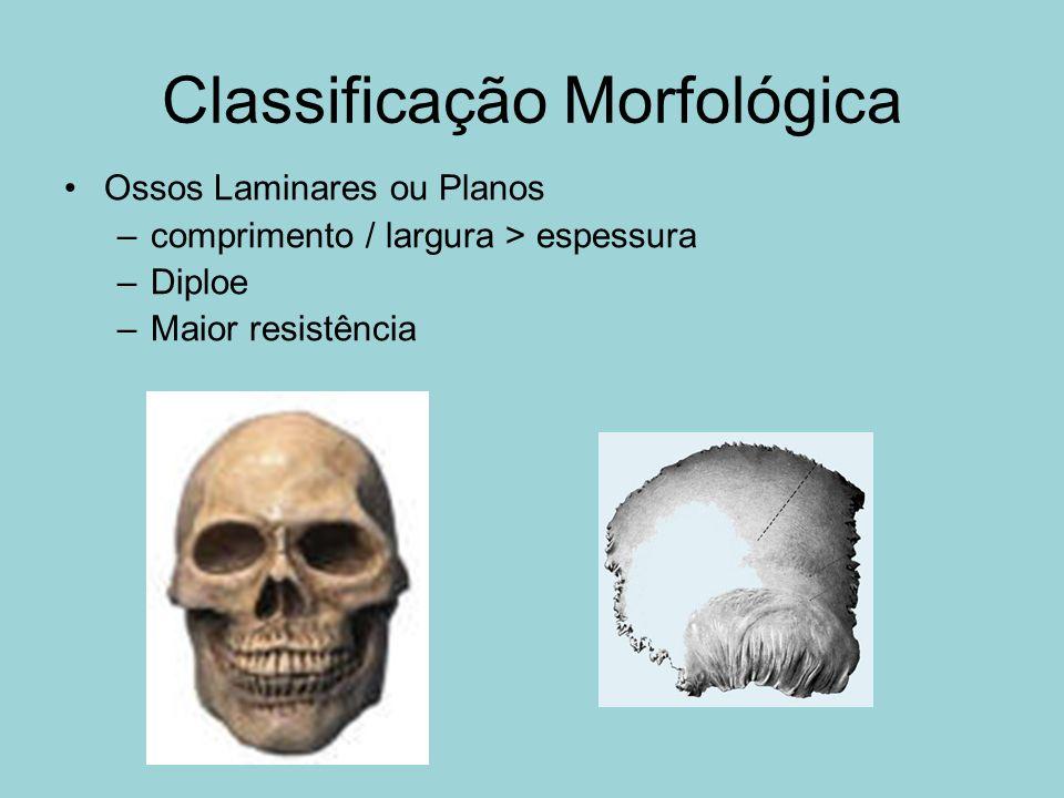 Classificação Morfológica Ossos Laminares ou Planos –comprimento / largura > espessura –Diploe –Maior resistência
