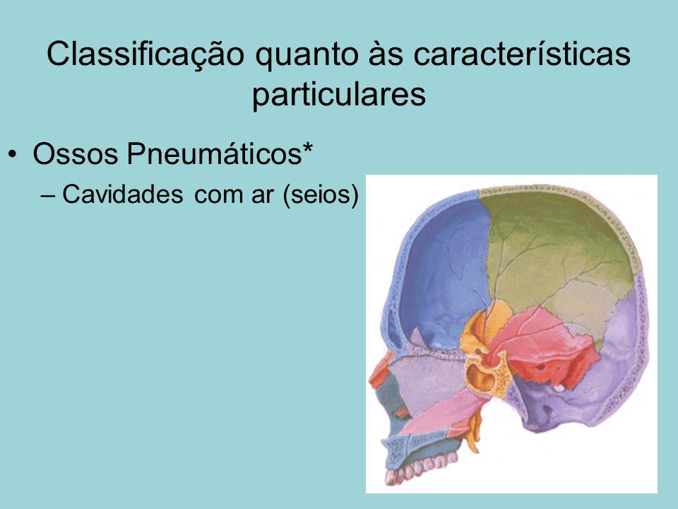 Classificação quanto às características particulares Ossos Pneumáticos* –Cavidades com ar (seios)