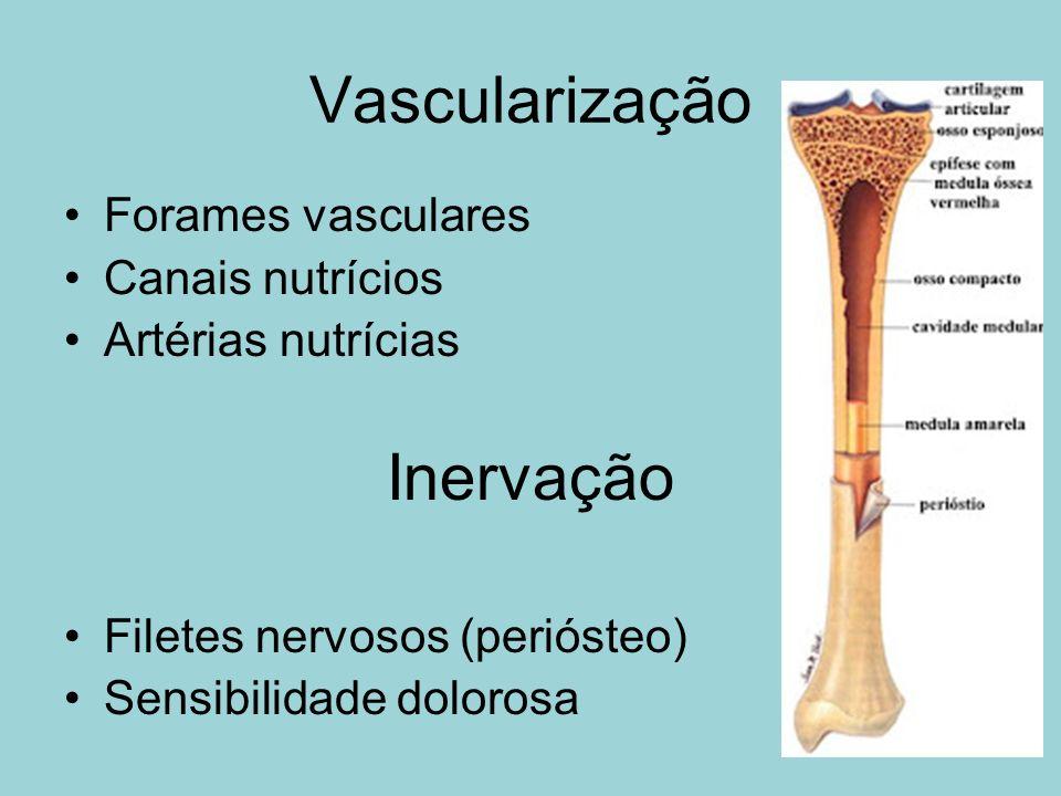 Vascularização Forames vasculares Canais nutrícios Artérias nutrícias Inervação Filetes nervosos (periósteo) Sensibilidade dolorosa