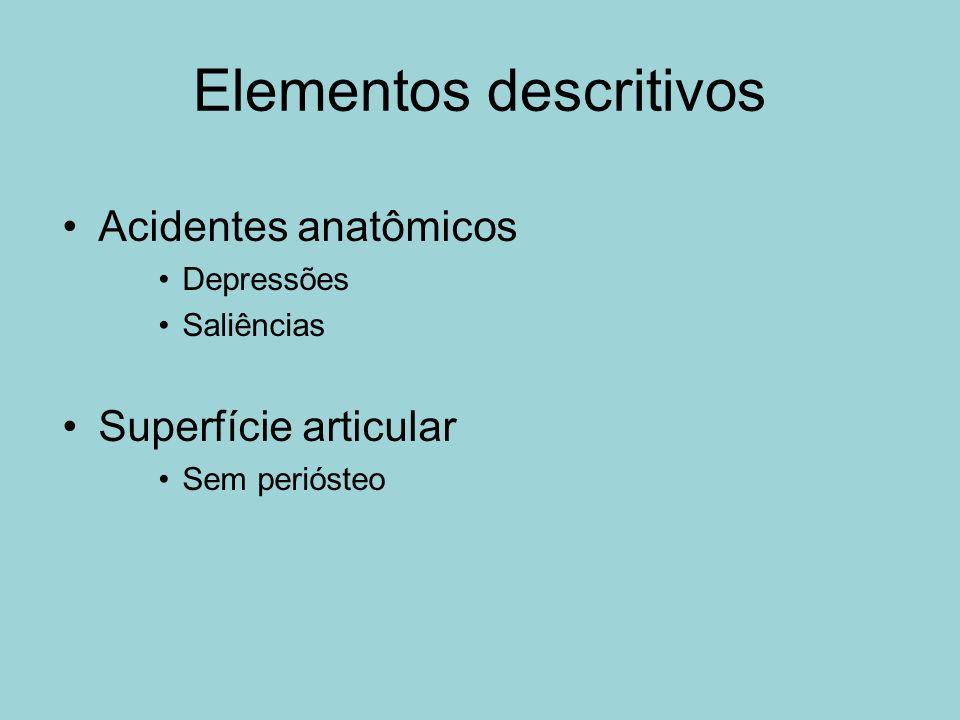 Elementos descritivos Acidentes anatômicos Depressões Saliências Superfície articular Sem periósteo