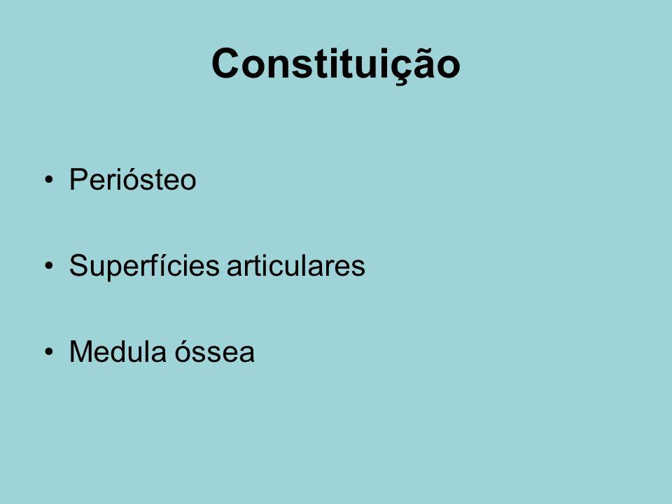 Esqueleto Apendicular MMSS – úmero, ulna, rádio,ossos do carpo, metacarpos e falanges MMII – fêmur, tíbia, fíbula, patela, ossos do tarso, metatarsos e falanges Esqueleto das cinturas O esqueleto apendicular articula-se com o esqueleto axial através de duas cinturas: –Pélvica ossos do quadril –Escapular escápula e clavícula