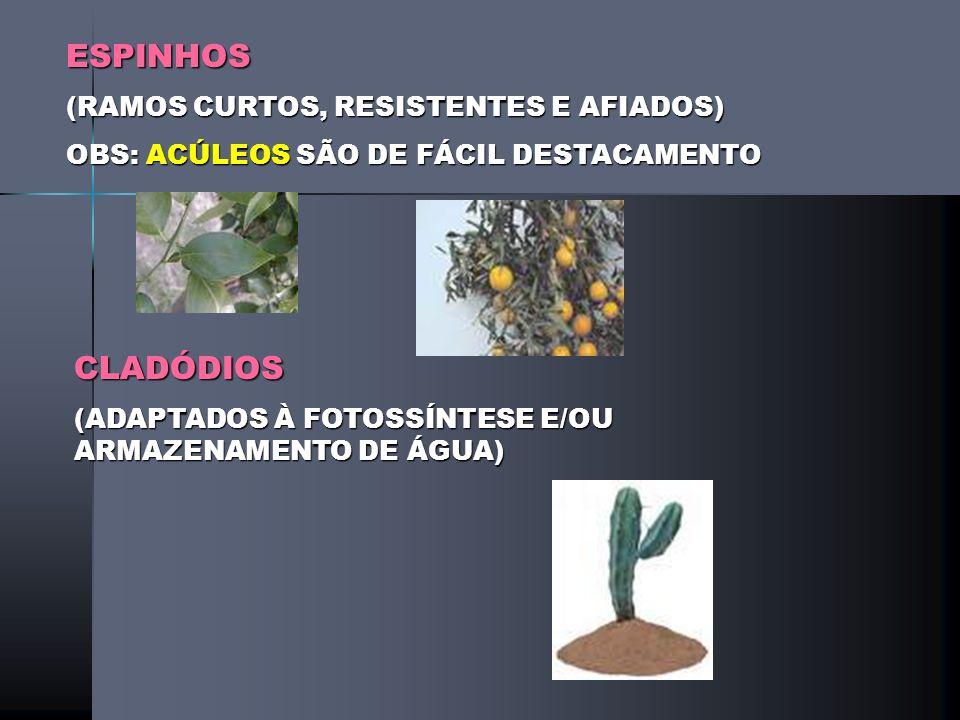 BULBO (CAULES E FOLHAS MODIFICADAS) TIPOSTUNICADOESCAMOSOCHEIO