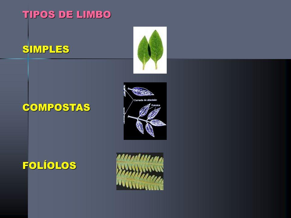 Classificações FILOTAXIA (DISPOSIÇÃO DAS FOLHAS NO CAULEROBUSTOS) ALTERNADAOPOSTAVERTICIALDA