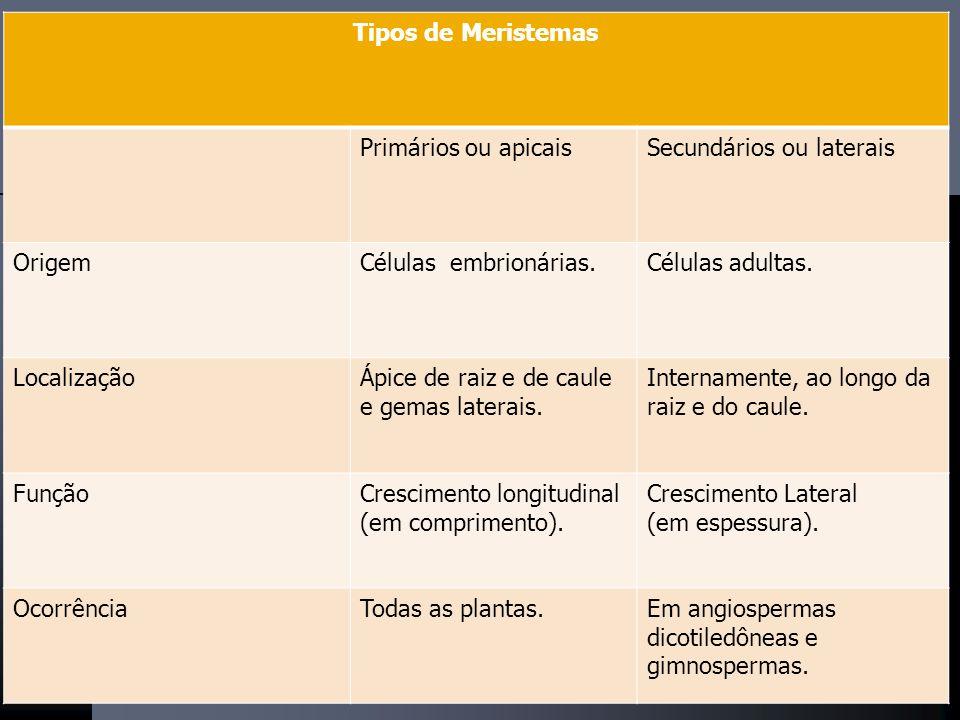 Tipos de Meristemas Primários ou apicaisSecundários ou laterais OrigemCélulas embrionárias.Células adultas.