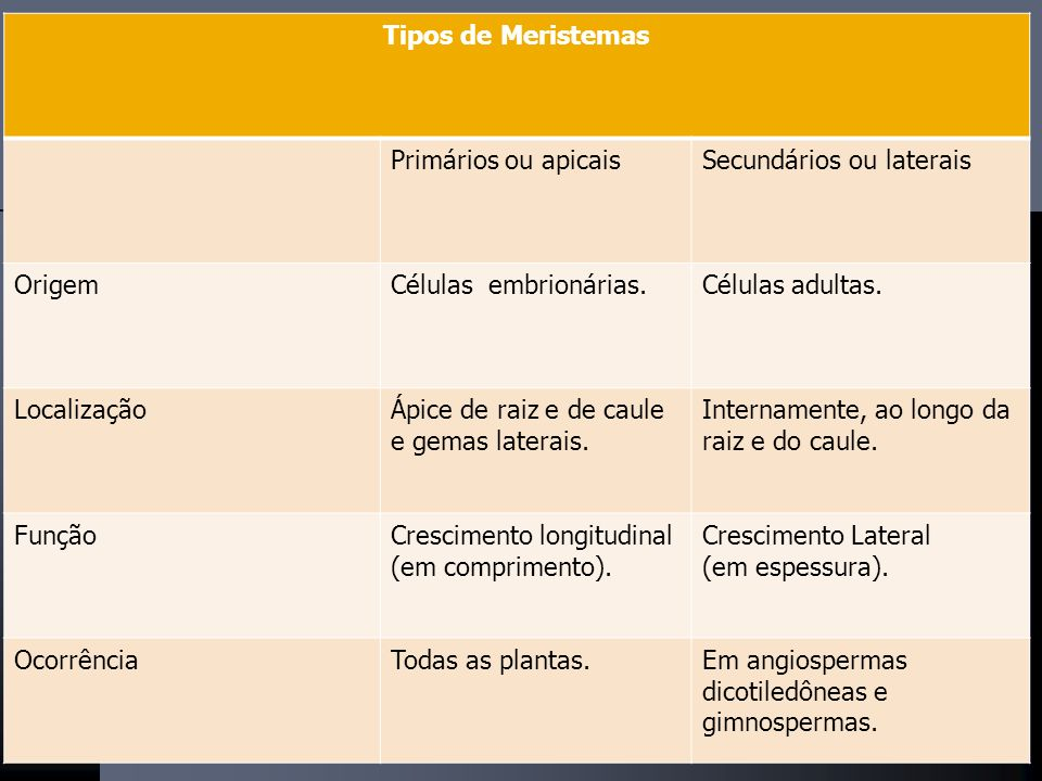 TECIDOS MERISTEMÁTICOS MERISTEMA APICAL (CRESCIMENTO PRIMÁRIO) MERISTEMA APICAL (CRESCIMENTO PRIMÁRIO) 1. PROTODERME 2. PROCÂMBIO 3. MERISTEMA FUNDAME