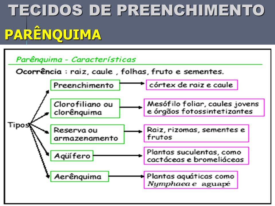 PARÊNQUIMA TECIDOS DE PREENCHIMENTO