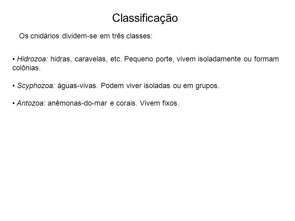 Classificação Hidrozoa: hidras, caravelas, etc.
