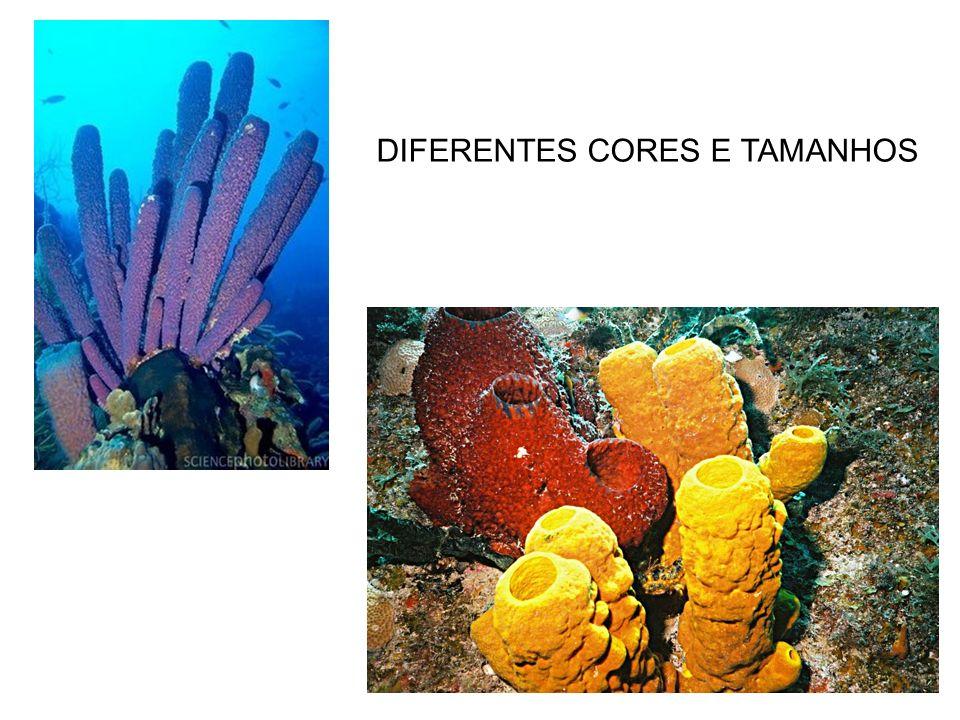 DIFERENTES CORES E TAMANHOS