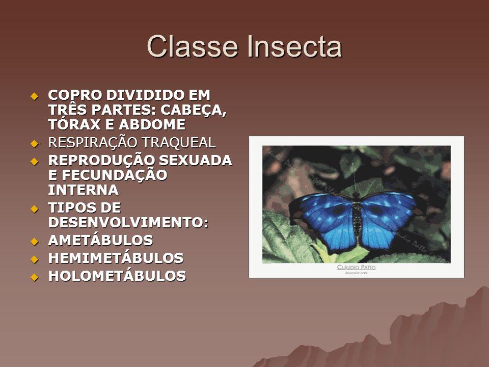 Classe Insecta COPRO DIVIDIDO EM TRÊS PARTES: CABEÇA, TÓRAX E ABDOME COPRO DIVIDIDO EM TRÊS PARTES: CABEÇA, TÓRAX E ABDOME RESPIRAÇÃO TRAQUEAL RESPIRA