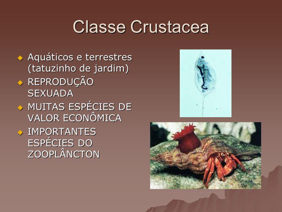 Classe Crustacea Aquáticos e terrestres (tatuzinho de jardim) Aquáticos e terrestres (tatuzinho de jardim) REPRODUÇÃO SEXUADA REPRODUÇÃO SEXUADA MUITA