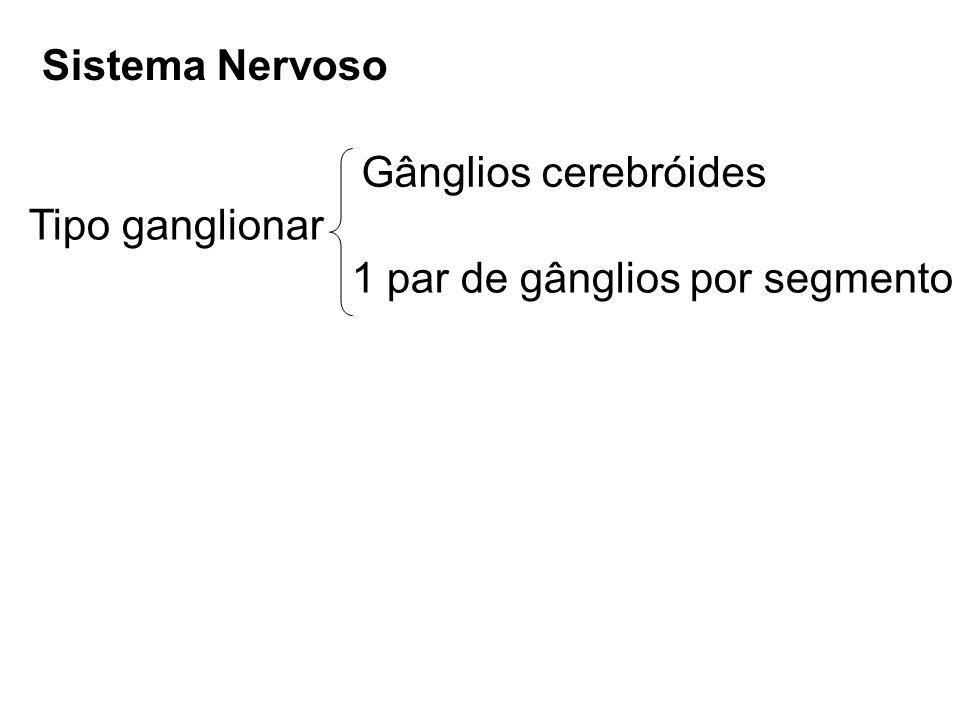 Sistema Nervoso Tipo ganglionar Gânglios cerebróides 1 par de gânglios por segmento