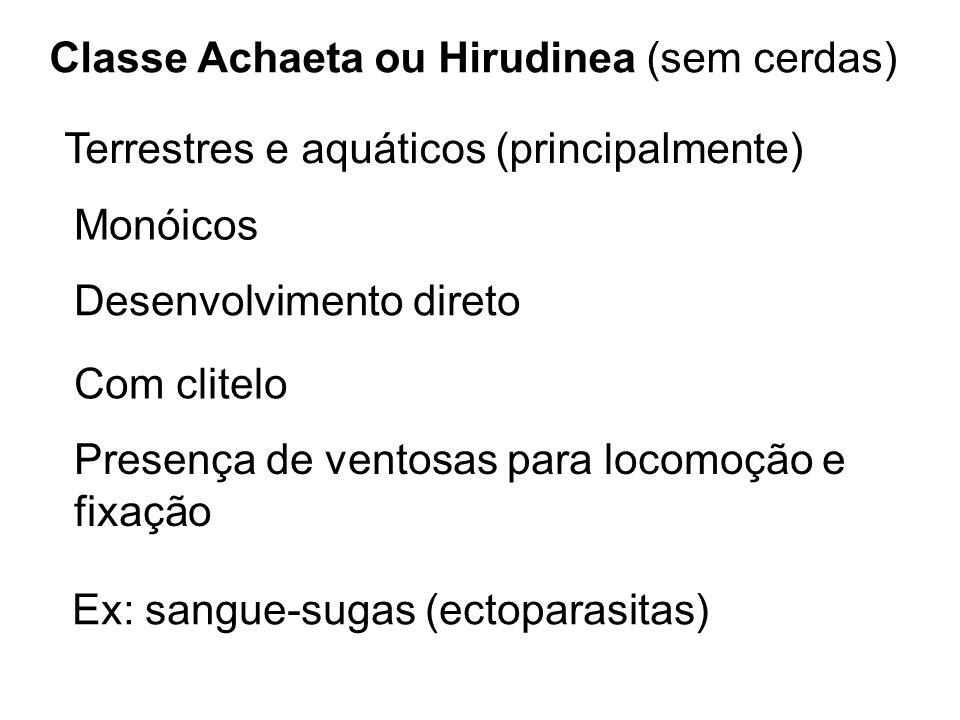 Classe Achaeta ou Hirudinea (sem cerdas) Terrestres e aquáticos (principalmente) Monóicos Desenvolvimento direto Com clitelo Presença de ventosas para