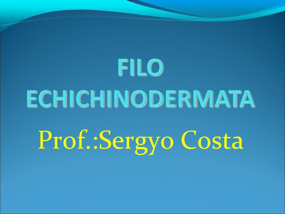 Prof.:Sergyo Costa