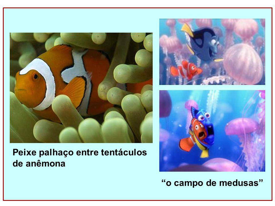 Peixe palhaço entre tentáculos de anêmona o campo de medusas