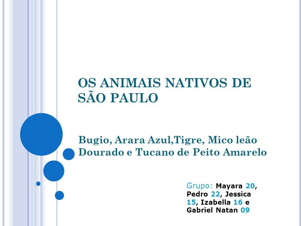 OS ANIMAIS NATIVOS DE SÃO PAULO Bugio, Arara Azul,Tigre, Mico leão Dourado e Tucano de Peito Amarelo Grupo: Mayara 20, Pedro 22, Jessica 15, Izabella