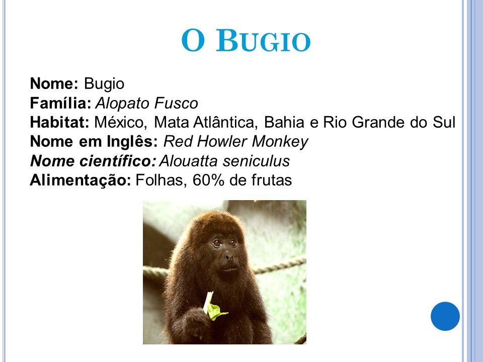O B UGIO Nome: Bugio Família: Alopato Fusco Habitat: México, Mata Atlântica, Bahia e Rio Grande do Sul Nome em Inglês: Red Howler Monkey Nome científi