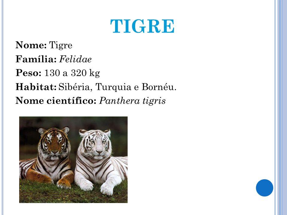 TIGRE Nome: Tigre Família: Felidae Peso: 130 a 320 kg Habitat: Sibéria, Turquia e Bornéu. Nome científico: Panthera tigris