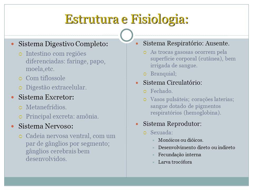 Estrutura e Fisiologia: Sistema Digestivo Completo: Intestino com regiões diferenciadas: faringe, papo, moela,etc. Com tiflossole Digestão extracelula