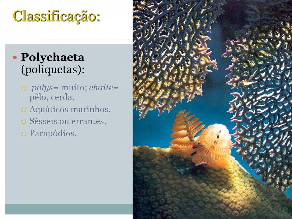 Classificação: Polychaeta (poliquetas): polys= muito; chaite= pêlo, cerda. Aquáticos marinhos. Sésseis ou errantes. Parapódios.