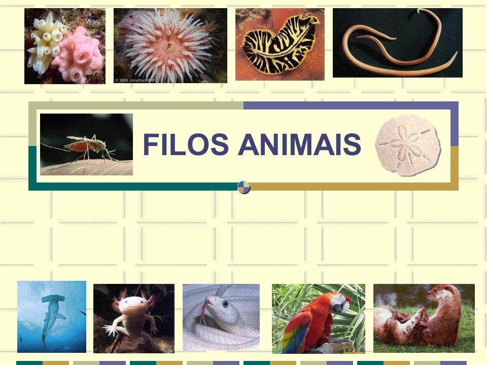 FILOS ANIMAIS