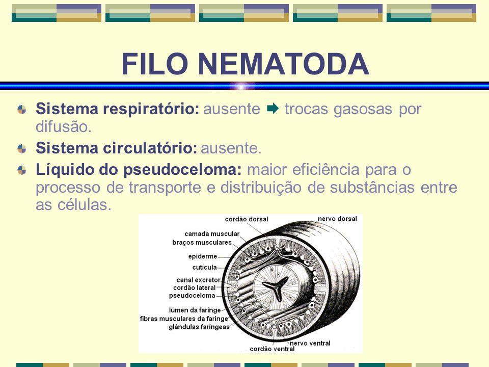 (www.bioloja.com) FILO NEMATODA Sistema respiratório: ausente trocas gasosas por difusão. Sistema circulatório: ausente. Líquido do pseudoceloma: maio