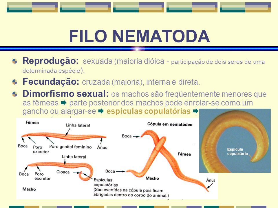 Ana Luisa Miranda Vilela (www.bioloja.com) FILO NEMATODA Reprodução: sexuada (maioria dióica - participação de dois seres de uma determinada espécie )