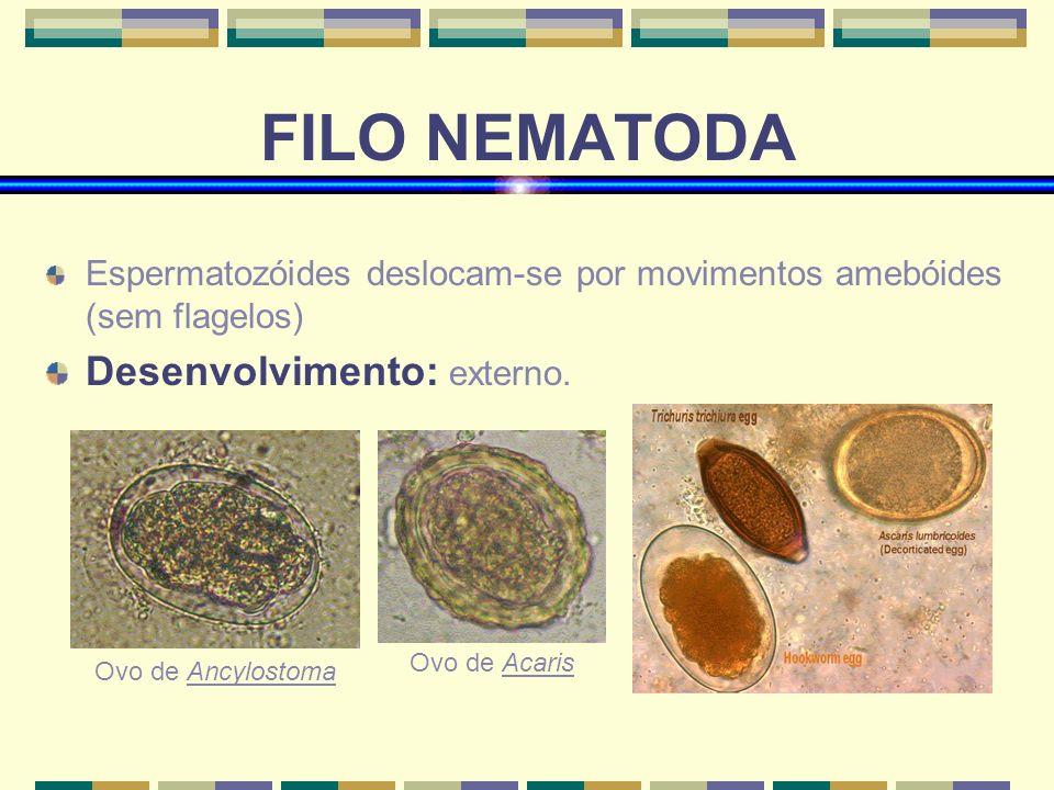 FILO NEMATODA Espermatozóides deslocam-se por movimentos amebóides (sem flagelos) Desenvolvimento: externo. Ovo de Ancylostoma Ovo de Acaris